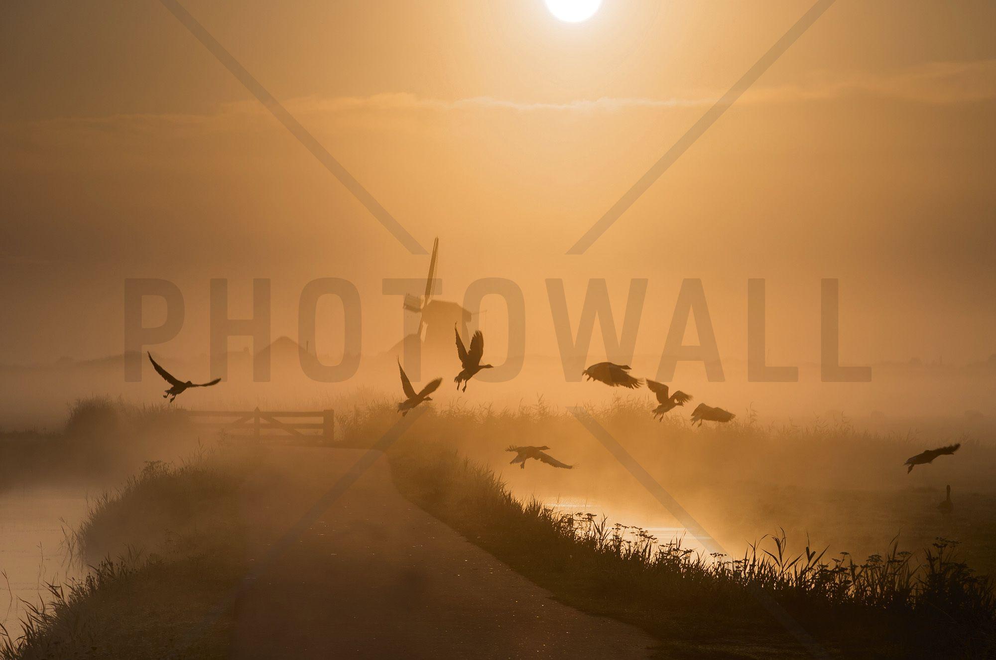 Sunrise Flight - Fotobehang & Behang - Photowall