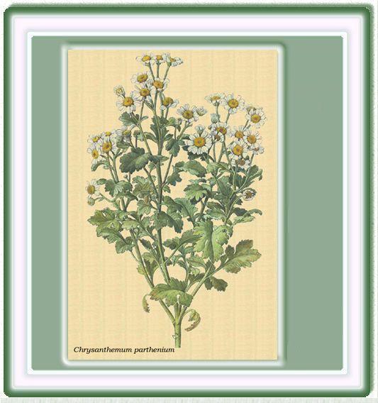 sansecompostaje.org :: Ver tema - OJO con las abejas