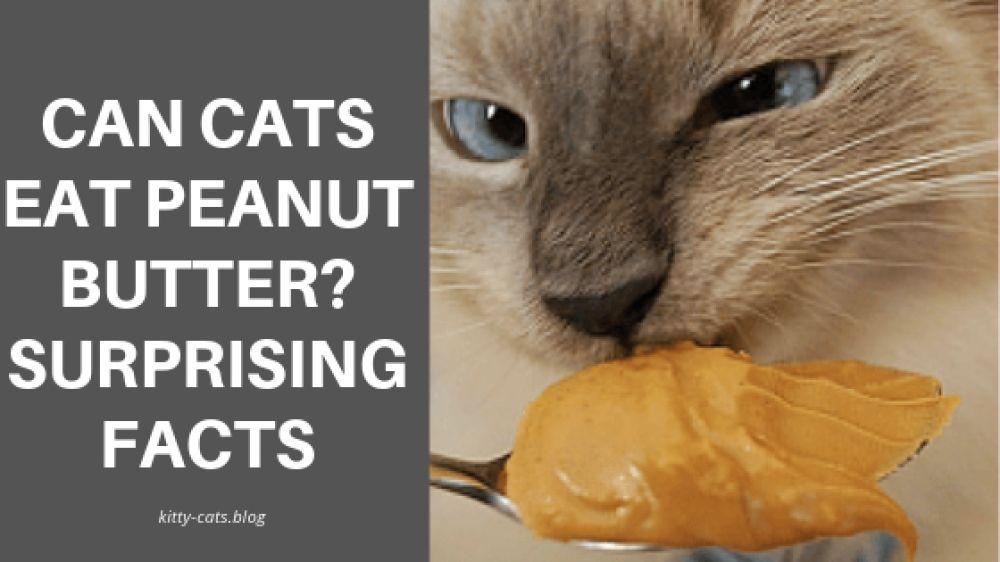 Can Cats Eat Peanut Butter? Surprising facts pet parents