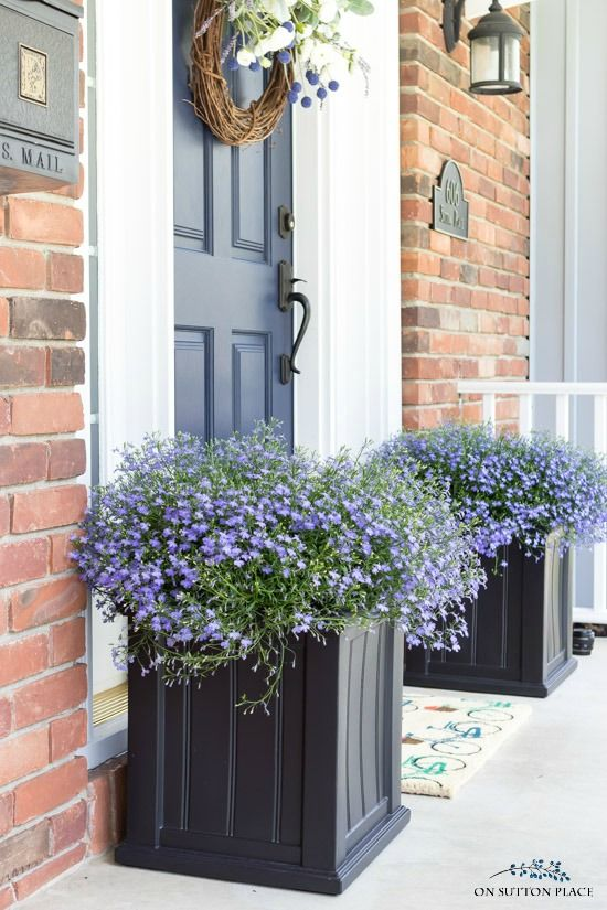 Shade Plants for Containers #shadecontainergardenideas