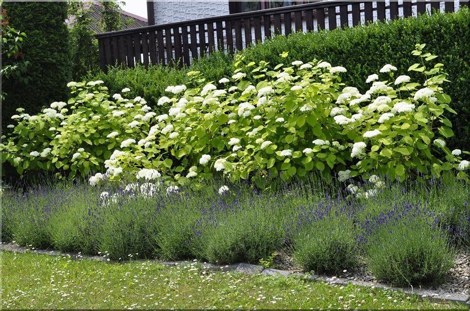 Lawenda I Hortensja Uwielbiam Ten Duet Plants Garden Herbs