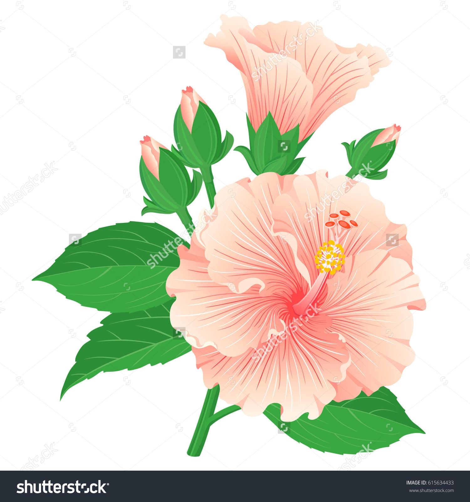 Set of multicolored hibiscus flowers with buds and leaves for set of multicolored hibiscus flowers with buds and leaves for design of tea and medicinal izmirmasajfo