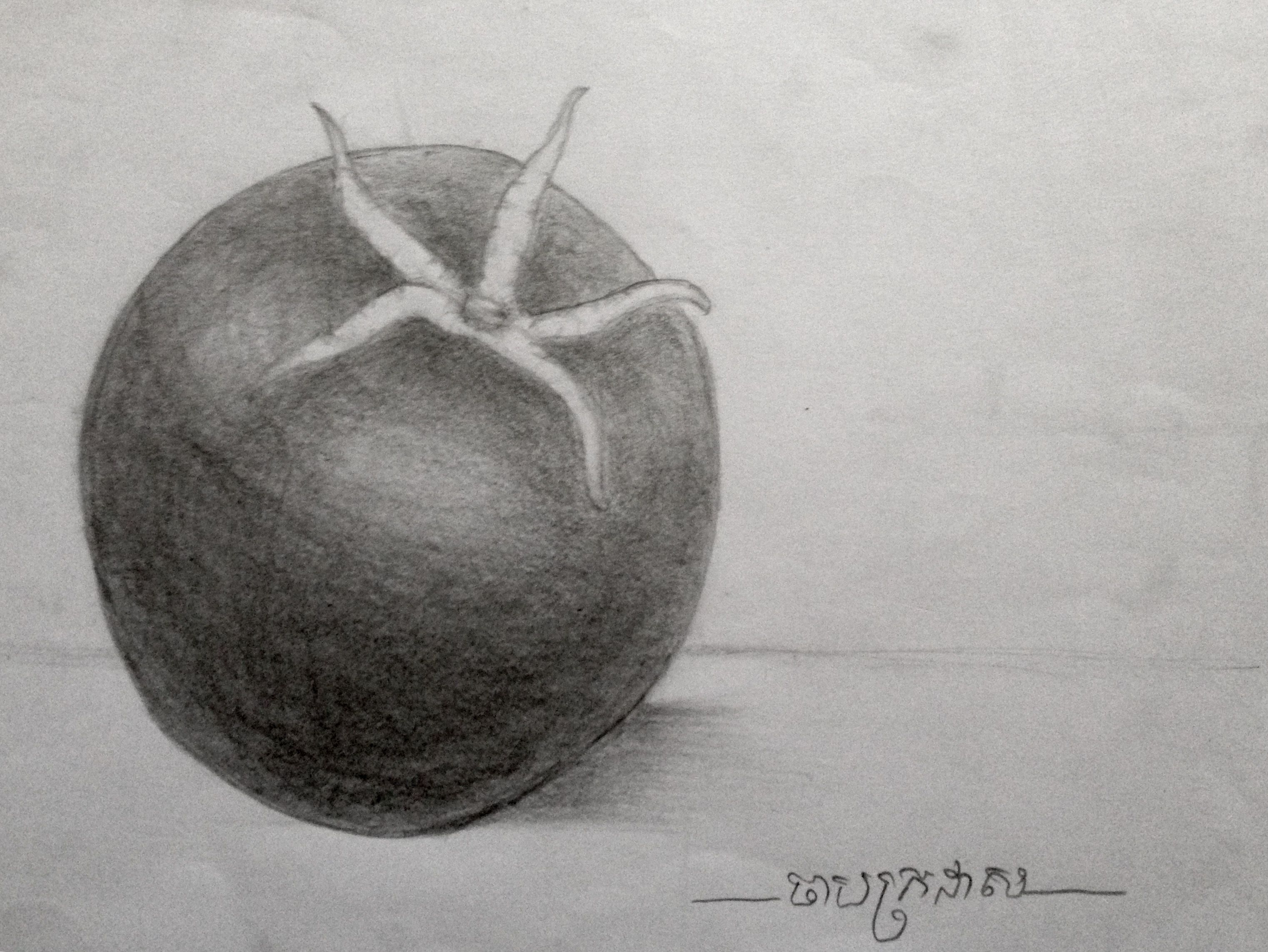 Tomato Pencil Drawing