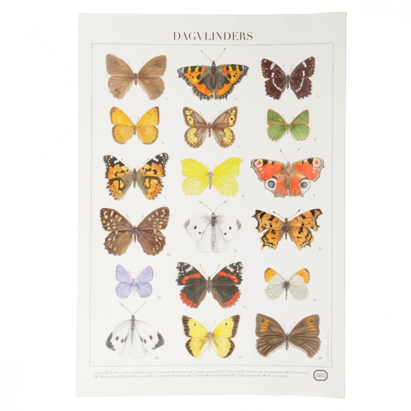 Vindt Ze Leuk In 2020 Met Afbeeldingen Vlinders Poster Kinderkamer Decoratie