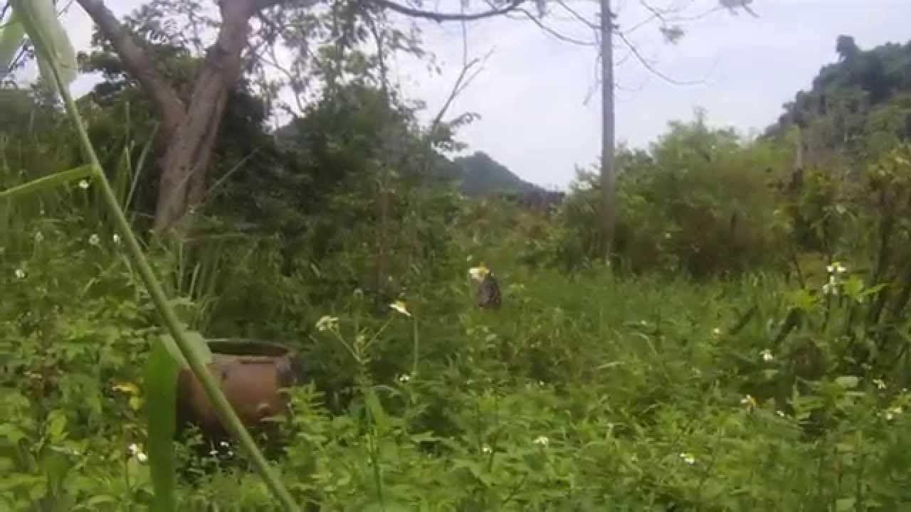 Национальный парк Кат-Ба, бабочка.