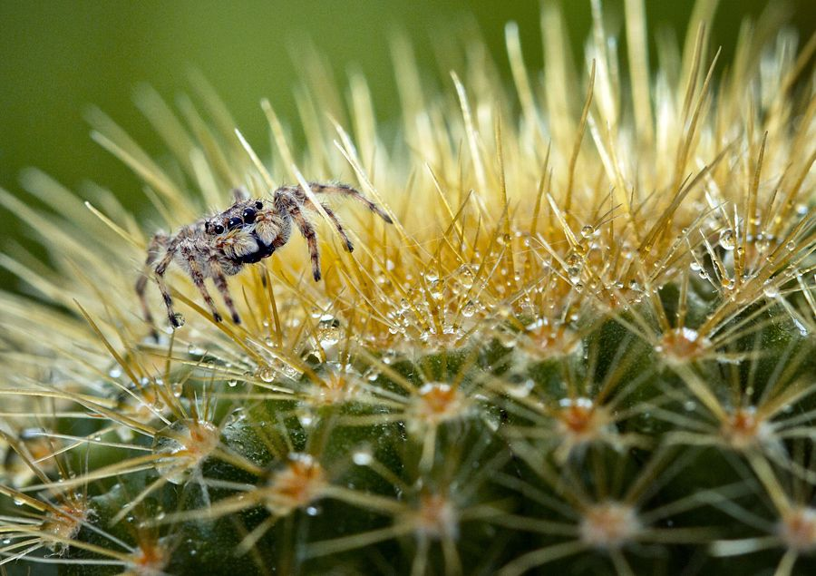 Spider... by Vincent Chung, via 500px