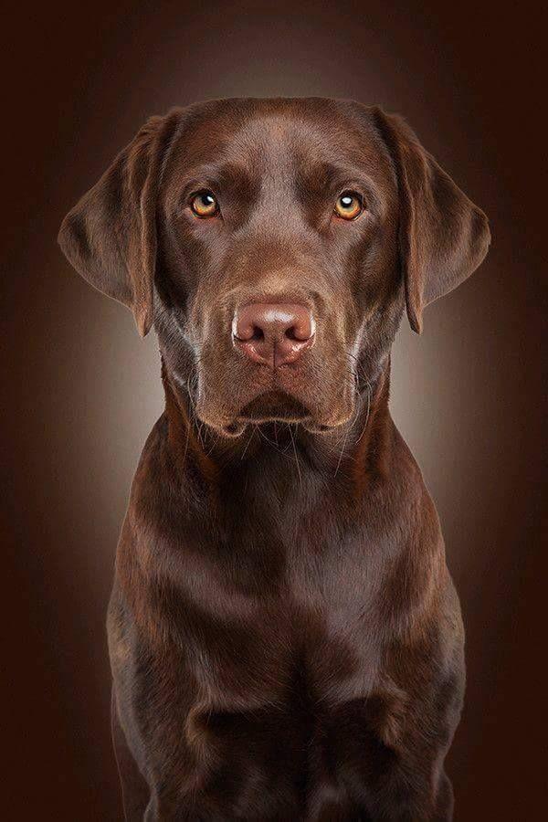 Pin Von Petra Klaiber Auf Brown Tiere Hunde Hunde Fotos