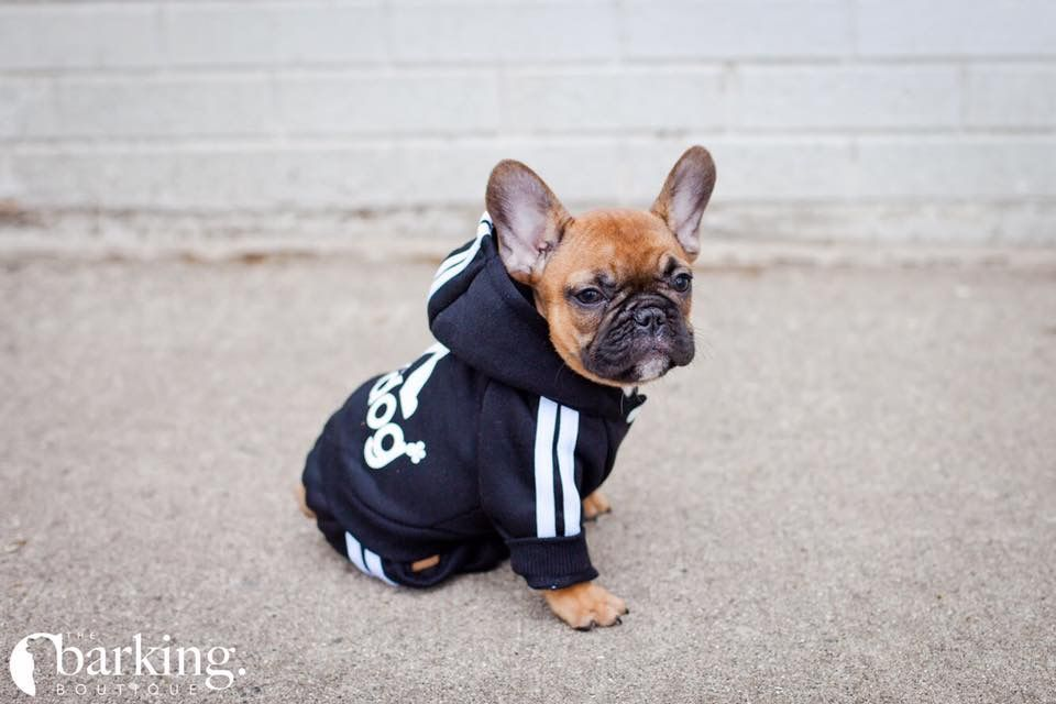 69cde2153725 Frenchie