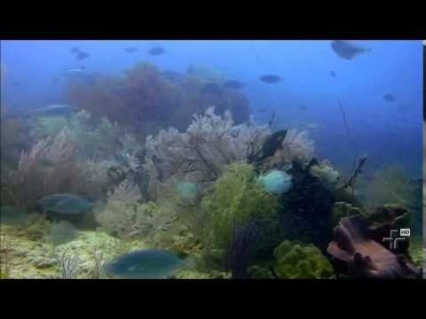Repórter Eco (TV Cultura) fala sobre Programa Marinho do WWF-Brasil