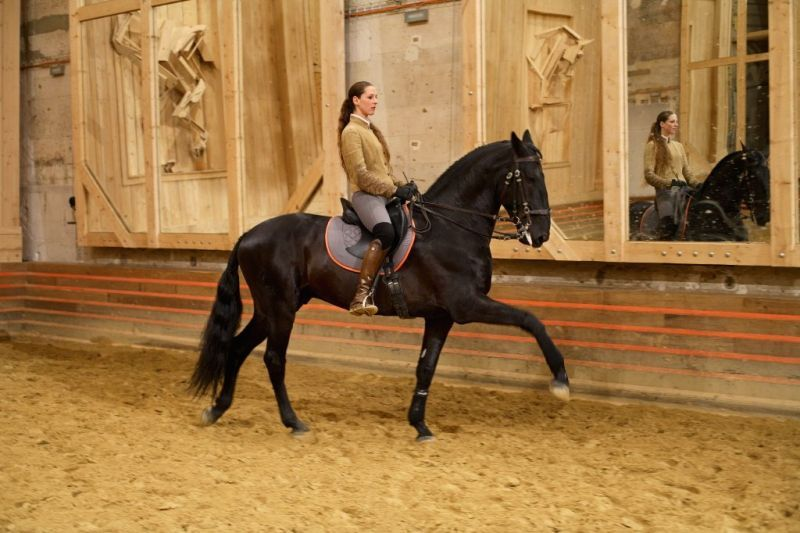 The Academy Of Equestrian Performance Arts In Versailles