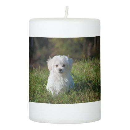 #white - #dog-young-dog-small-dog-maltese pillar candle
