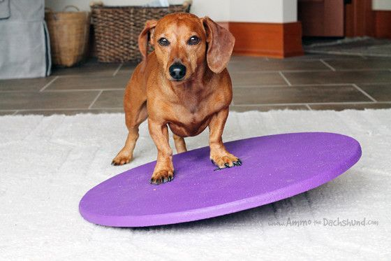 f61d0511353 How to Keep Your Dog Fit with a Wobble Board + A Giveaway (Ammo the ...