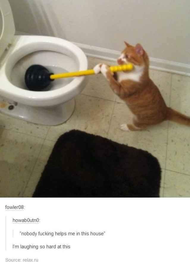 30 Tumblr Posts About Animals That Will Leave You Laughing - BlazePress http://ibeebz.com