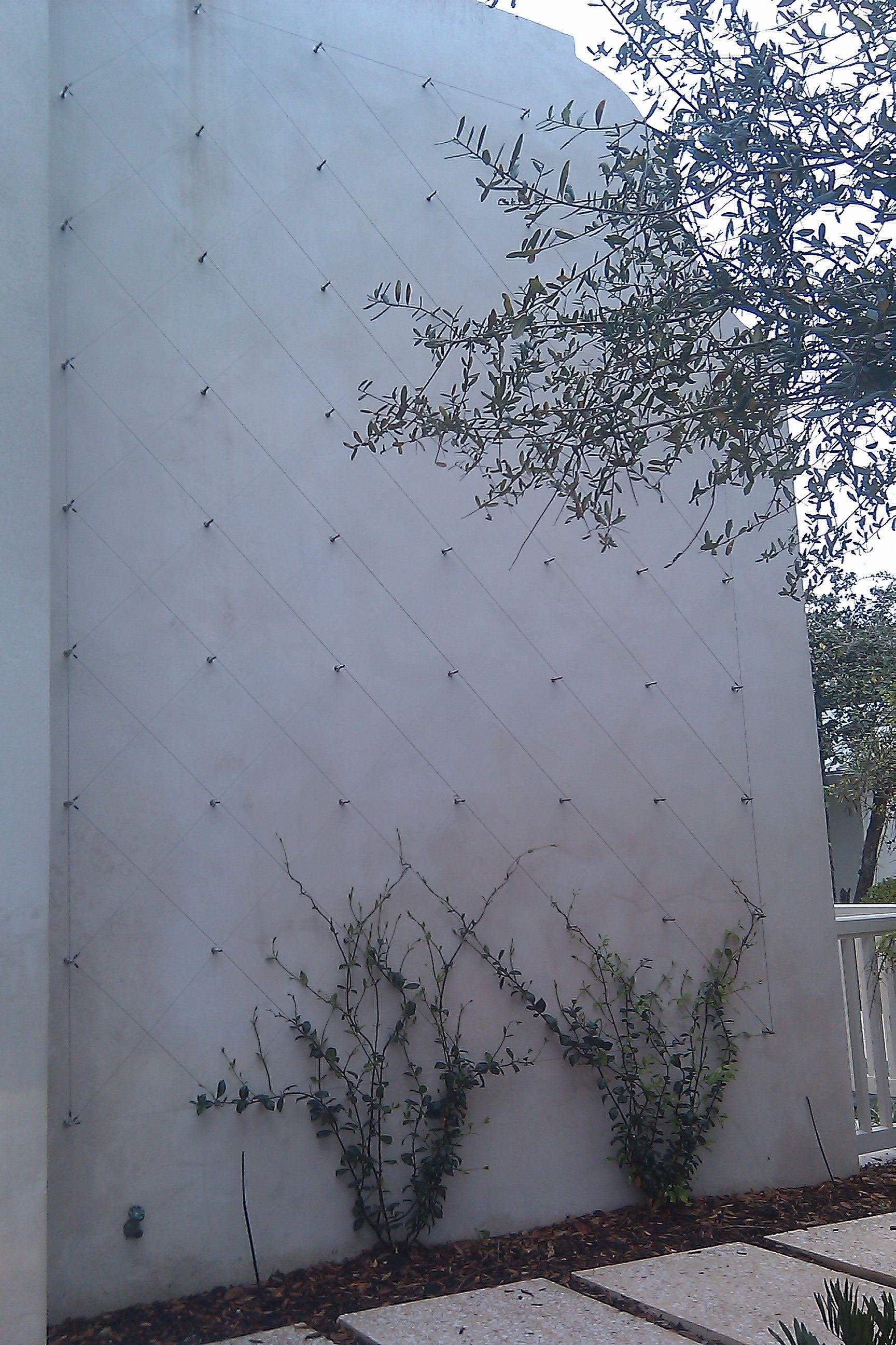 Wire trellis Vertical Garden Pinterest