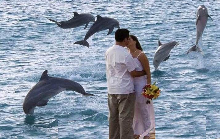 Increible  y especial entrega de anillo por un delfin , en el agua.