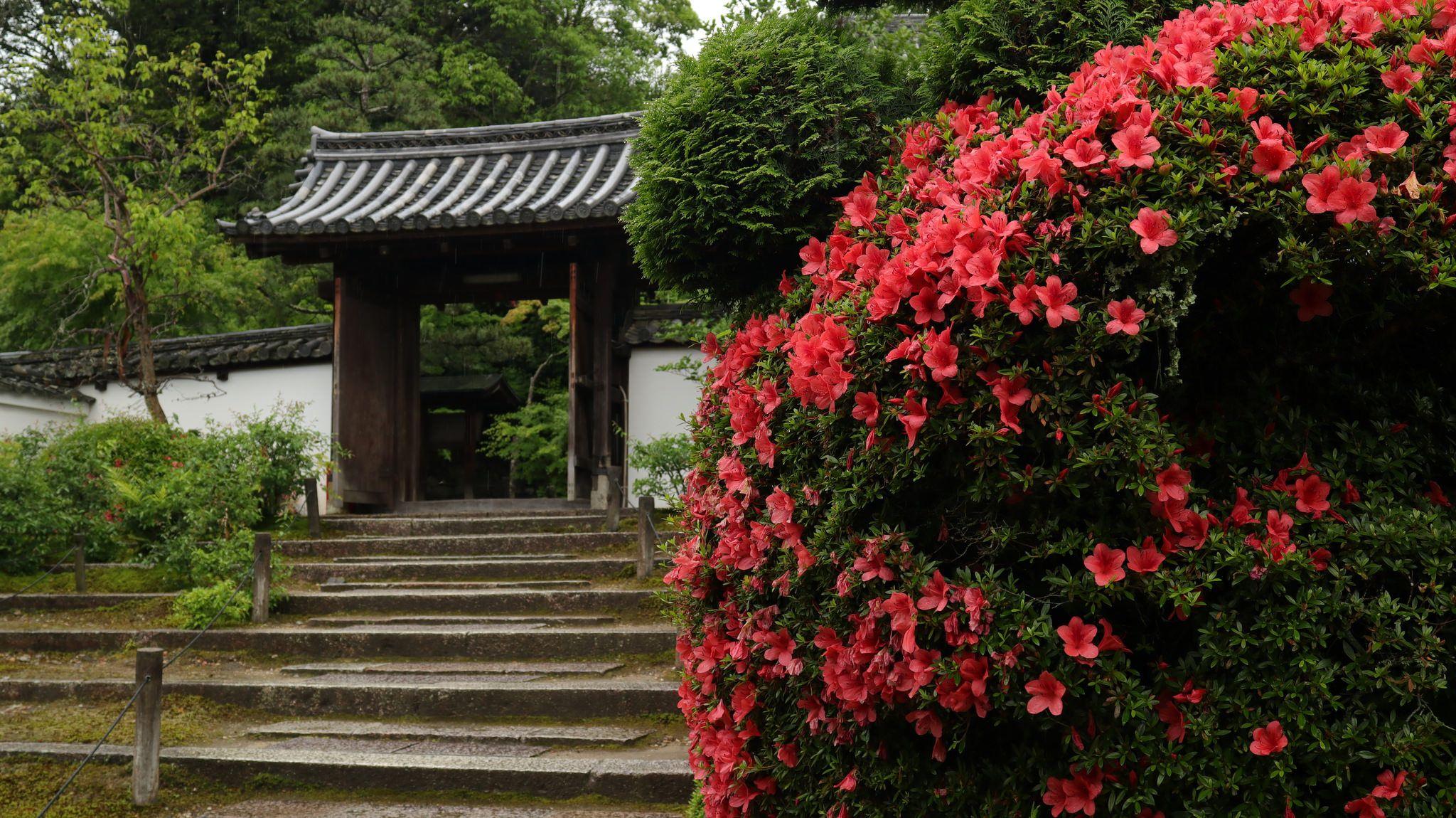Gate Gate Kyoto Plants