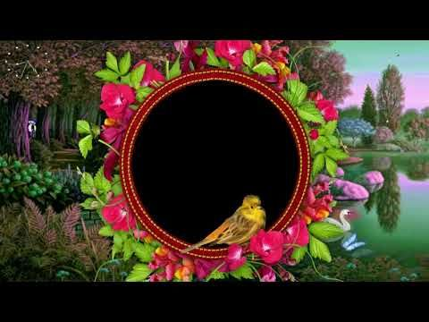 Royalty Free Motion Background Loops HD, Wedding Background