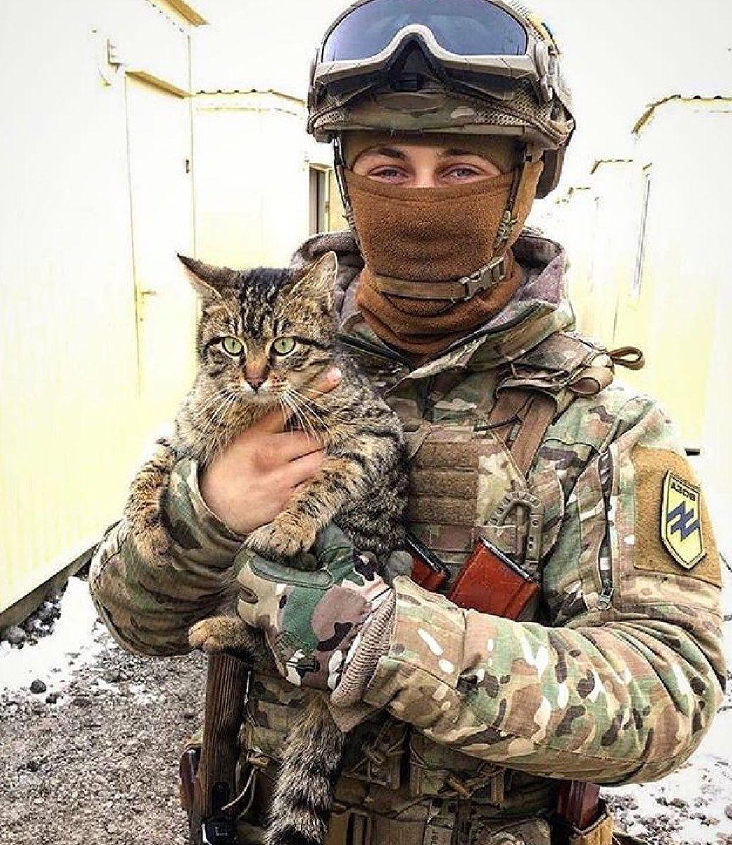 подходит картинки кота солдата крепкий алкоголь, отличающийся