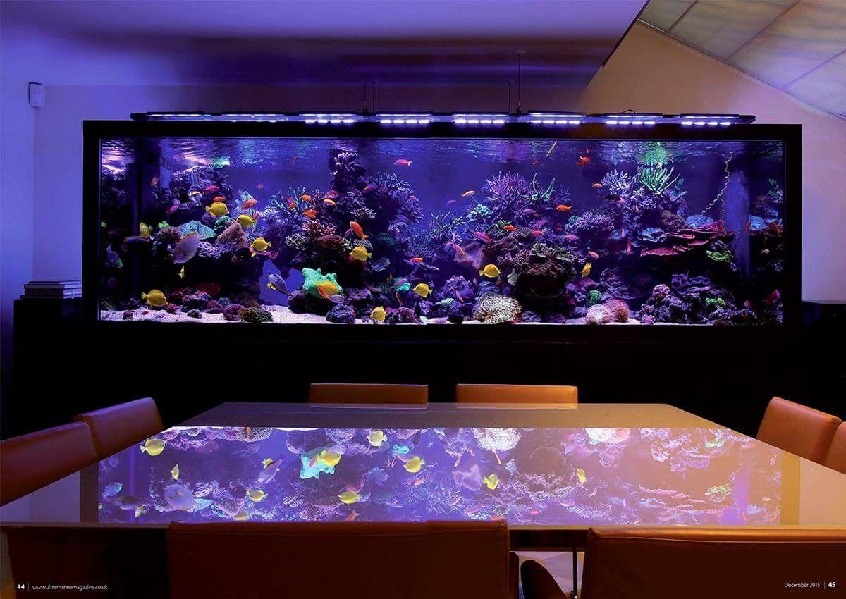 Pin von juan rubio auf saltwater aquariums pinterest for Salzwasser aquarium fische
