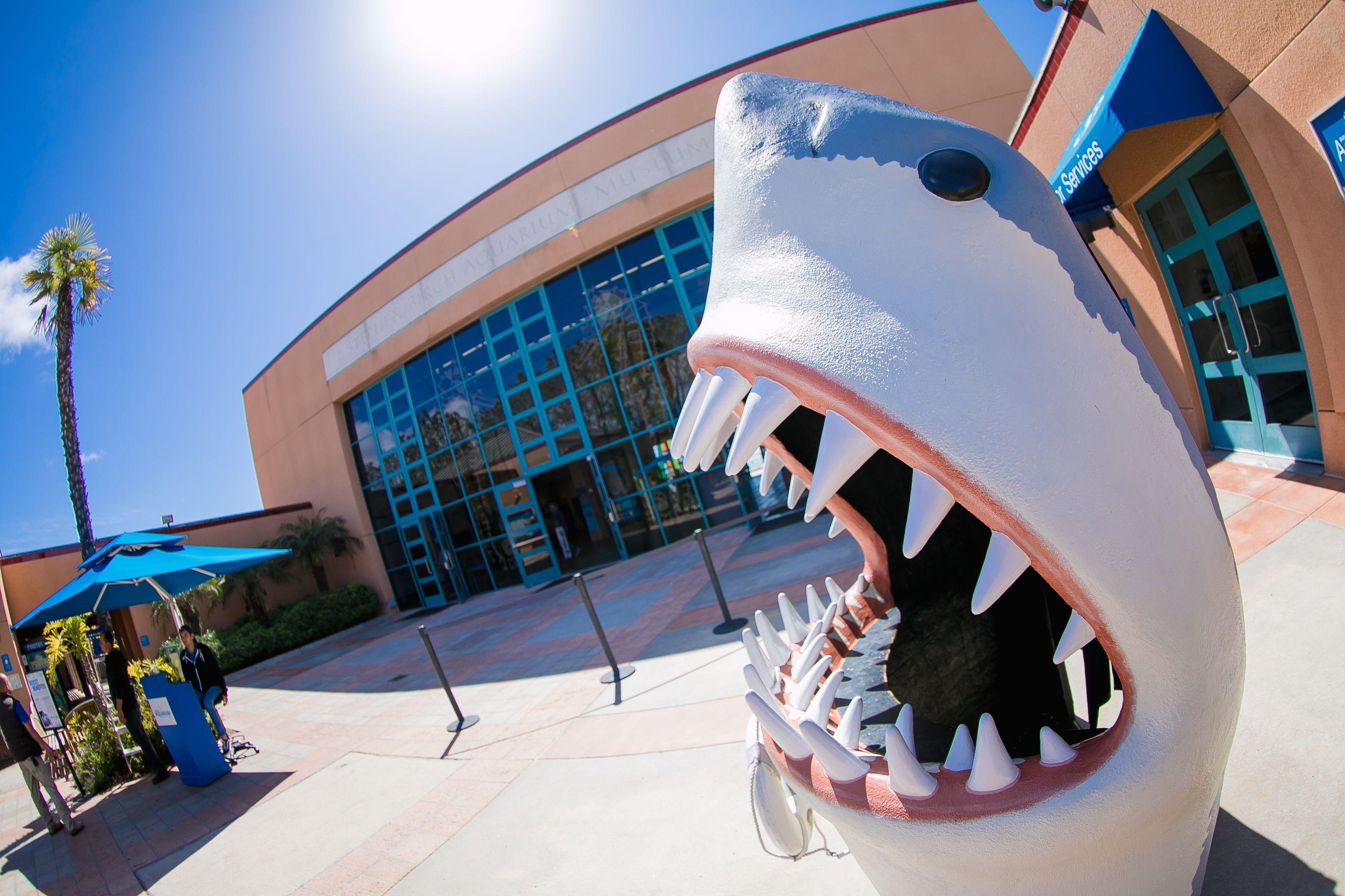 Whoa! Cool Shark head, man! Birch Aquarium at Scripps La