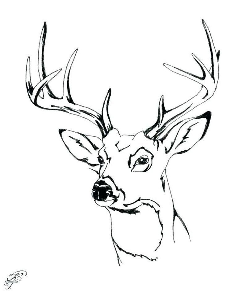 White Tailed Deer Coloring Pages To Print Free Coloring Sheets Coloring Deer Free Mam Deer Coloring Pages Animal Coloring Pages Deer Illustration