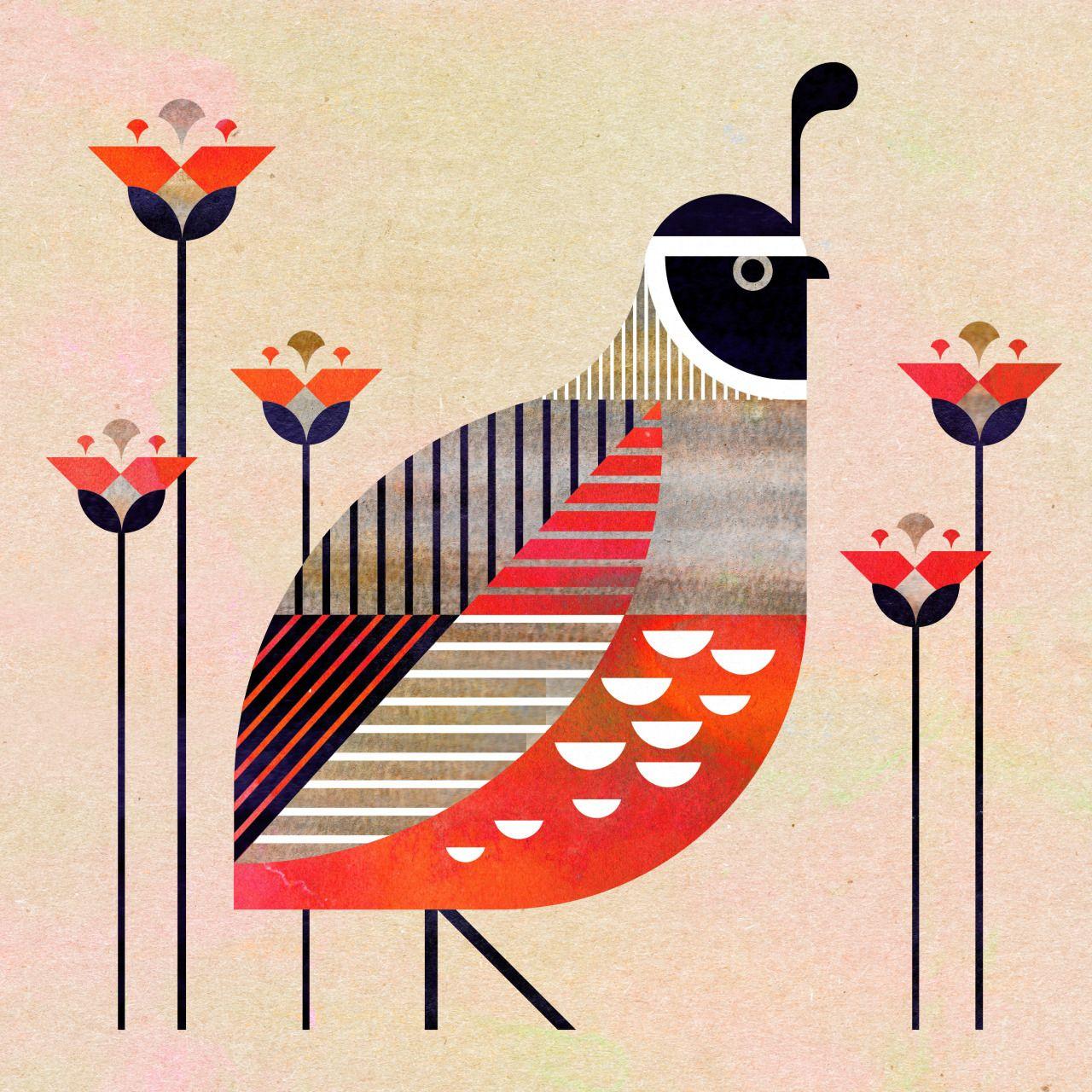 Gallináceas Perdiz Vintage Charley Harper   Ilustraciones de pájaros ...