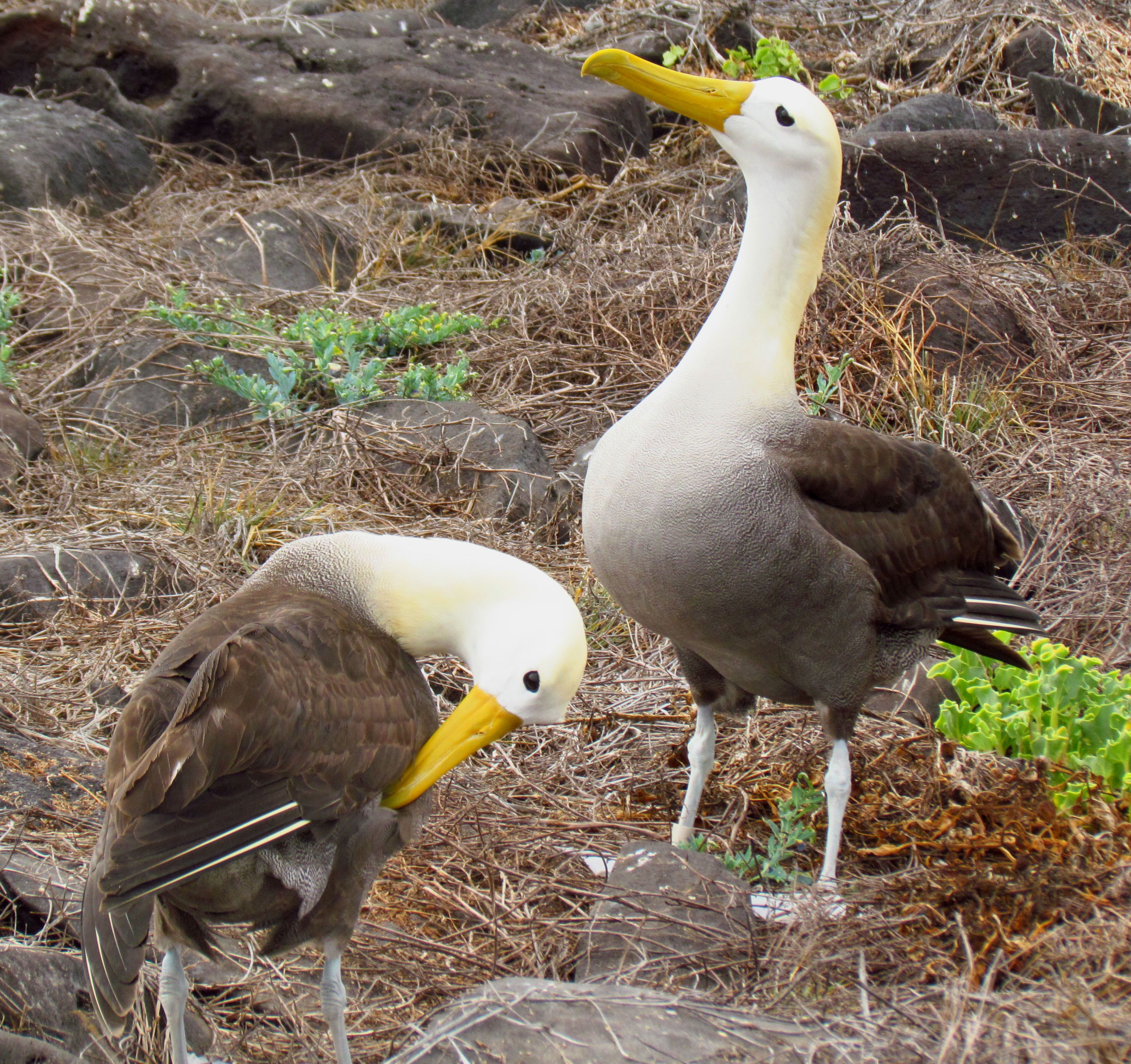 Pin by ottoblotto on 陸の生き物 Galapagos islands animals