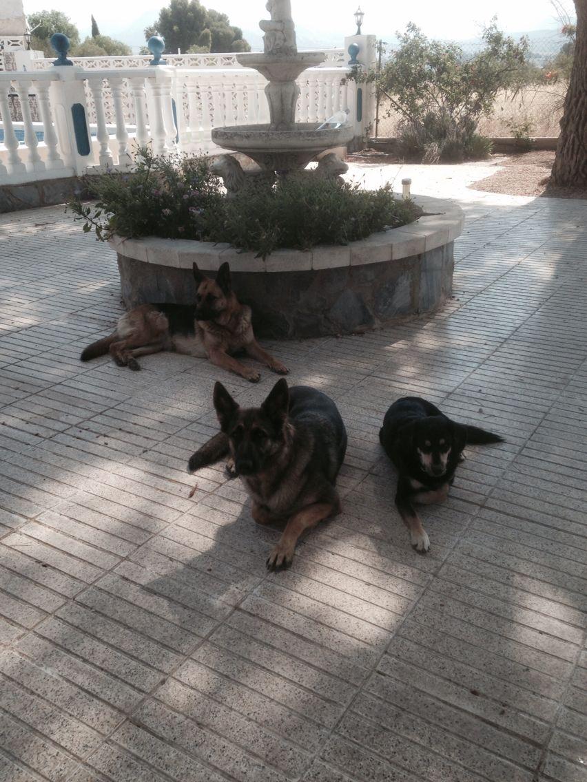 Skye, Chiquita & Pedro