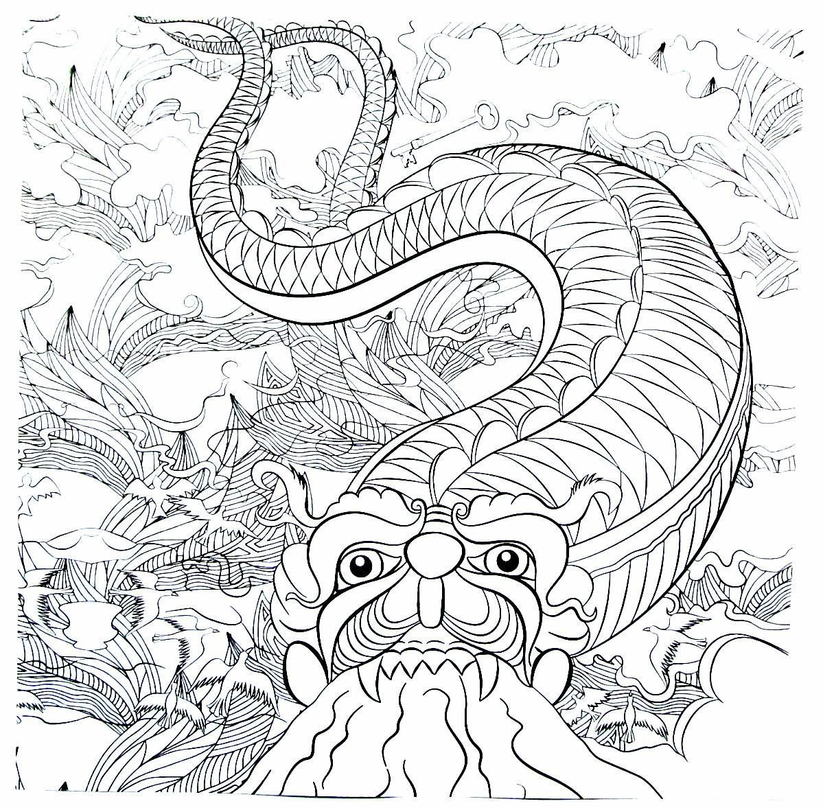 Fire breathing dragon detailed coloring book page for adults ...