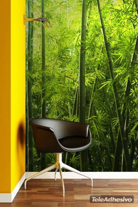 Fotomurales Bambú