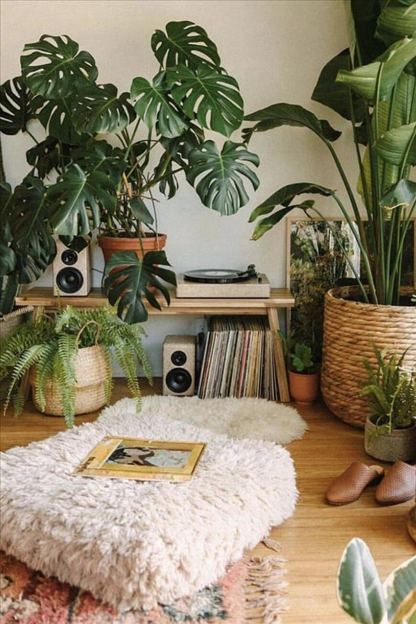 Photo of The indoor green plants design that is worth collecting –