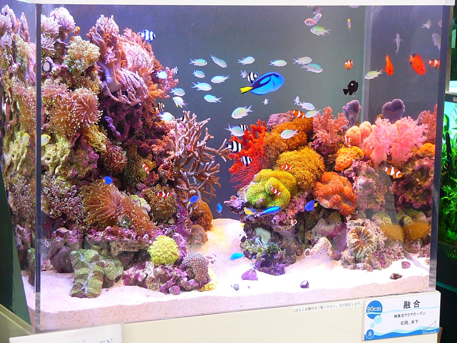 Saltwater aquarium fish tanks images for Saltwater fish tank