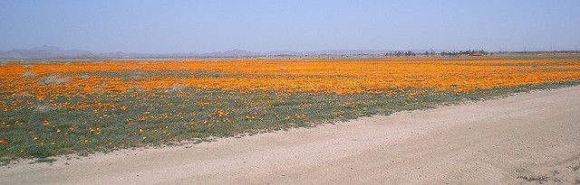 unbelievable orange - antelope valley, california