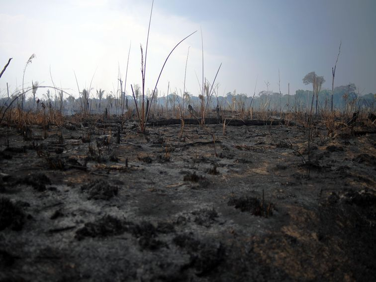 Amazon Rainforest Fires Indigenous Tribal Lands Are Burning