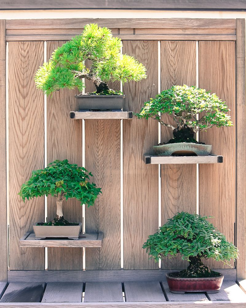 This vertical Bonsai backyard is created by a plain and natural wall to which several platforms are attached. Arboretum, Washington DC