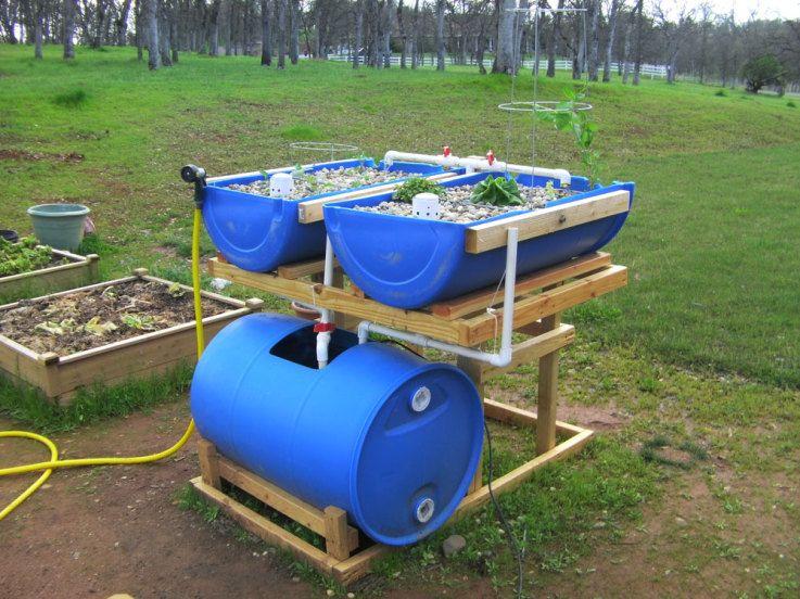 Aquaponics | Barrel Aquaponics System   Backyard AquaponicsBackyard  Aquaponics