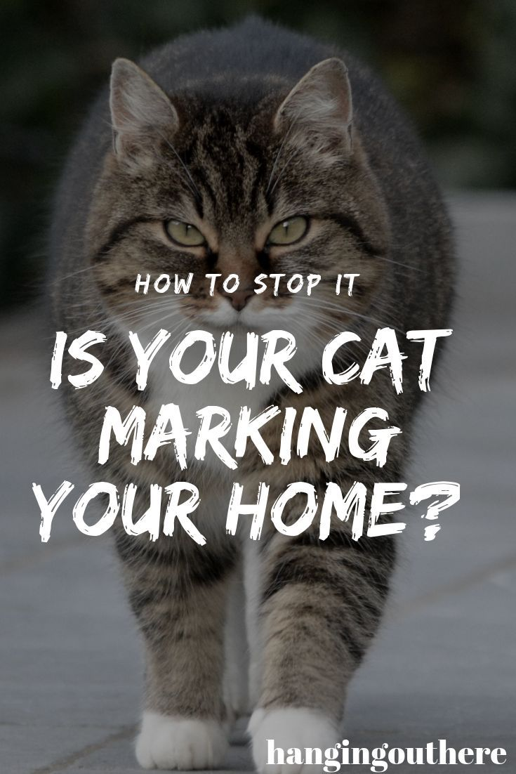Is Your Cat Marking Your Home? Cat behavior problems