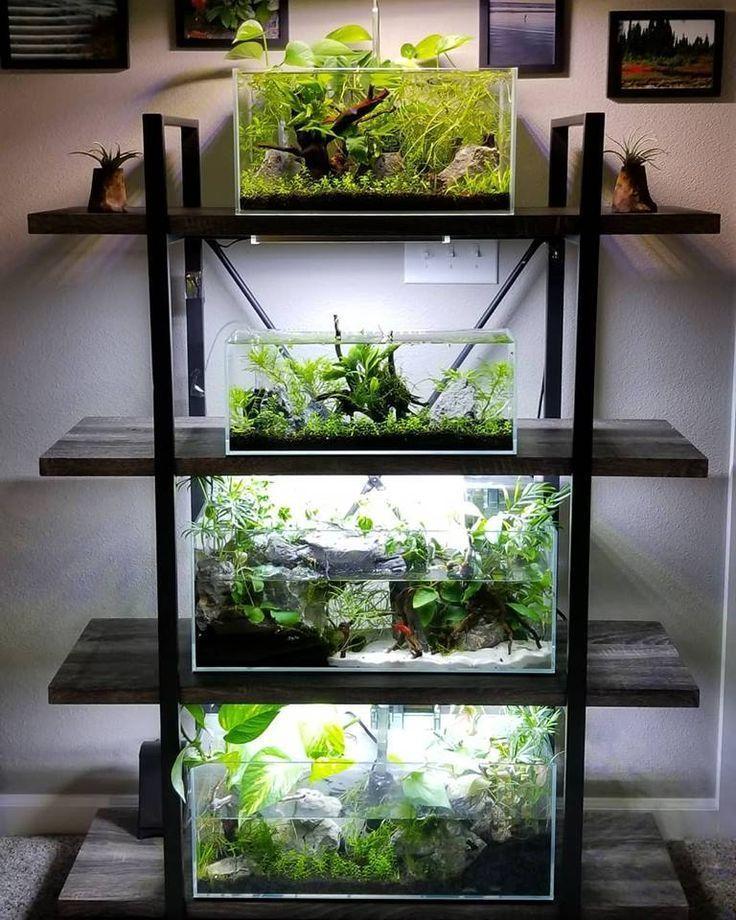14 aquarium fish tank ideas aquarium