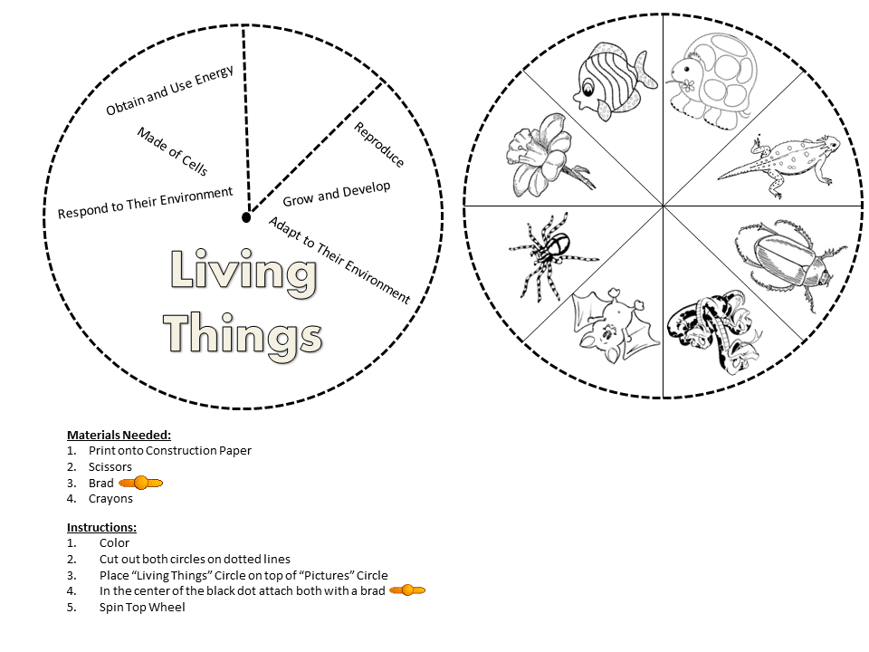 Living non living worksheets grade 1 following wheel created by living non living worksheets grade 1 following wheel created by kristina hughes using ccuart Image collections