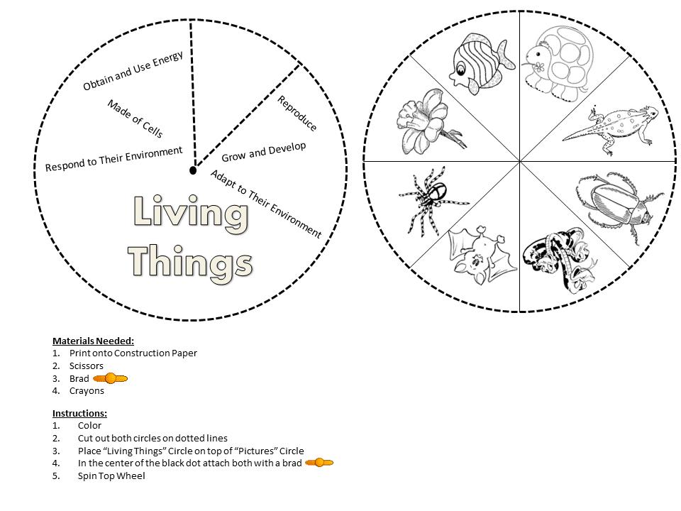Living NonLiving Worksheets Grade 1 Following Wheel