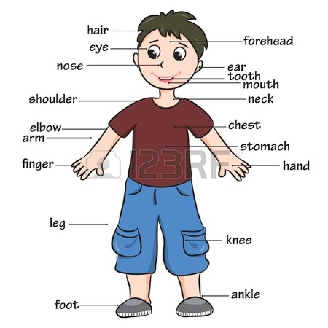 worksheet Body Parts Worksheets For Grade 1 exciting my body worksheet preschool all about me pinterest spanish parts printable flashcards 707207504aa0a08bfb9374175d3 se