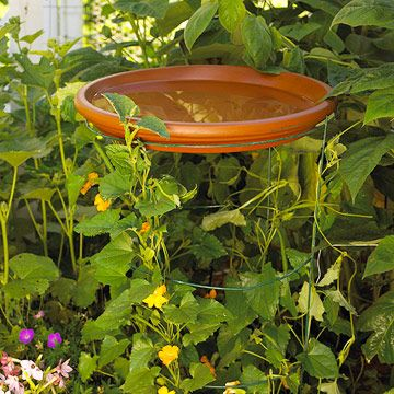 Hovering Saucer - A large terra-cotta saucer sits atop a tomato cage serving double-duty as a birdbath and trellis for climbing vines. To create an even more vibrant focal point, paint the saucer in your favorite color, or tie it into your garden's color scheme.