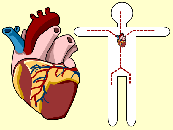Circulatory System - BrainPOP (With images)   Circulatory ...