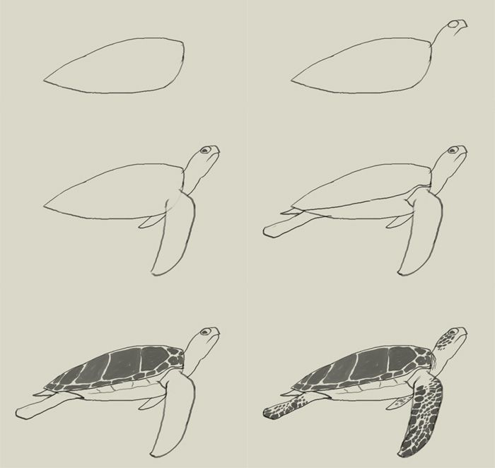 easy draw turtle - photo #11
