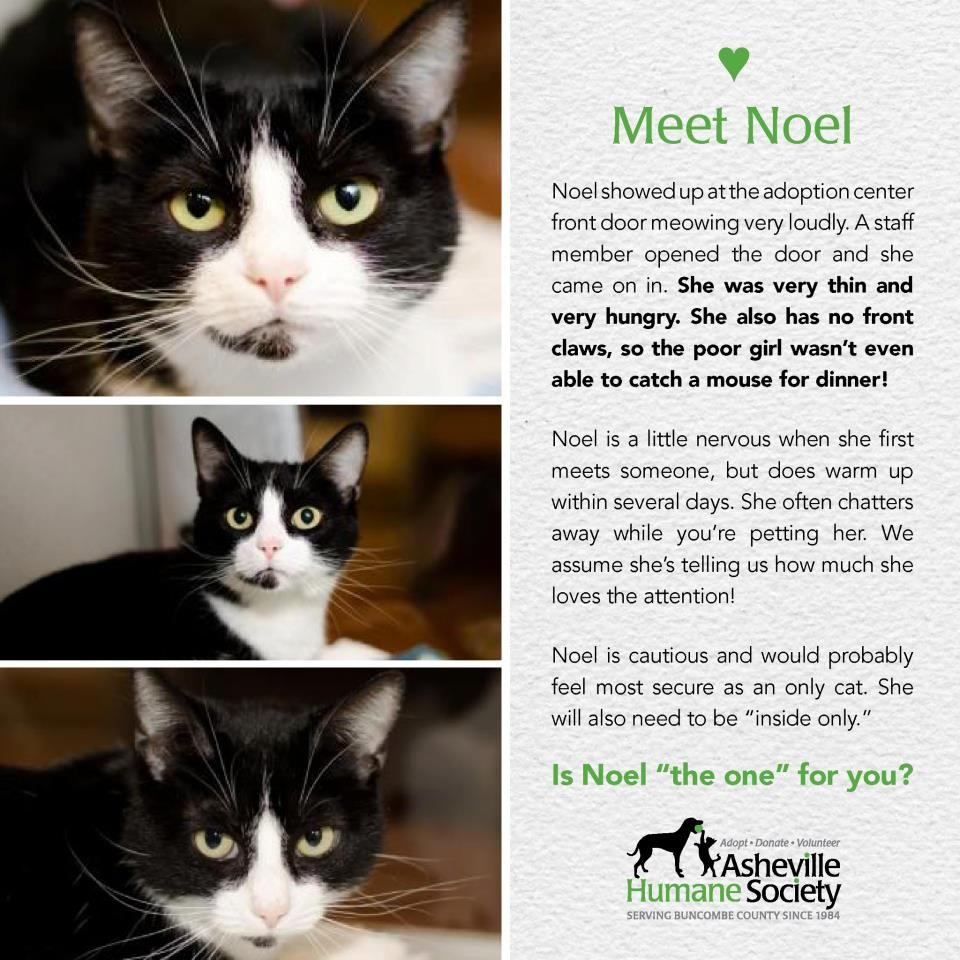 Welcome To Facebook Log In Sign Up Or Learn More Pet Adoption Adoption Humane Society