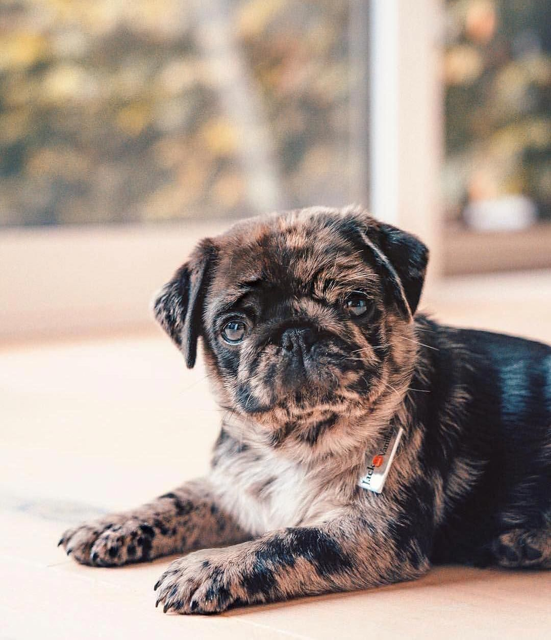 Visit Our Website For Even More Relevant Information On Puggies