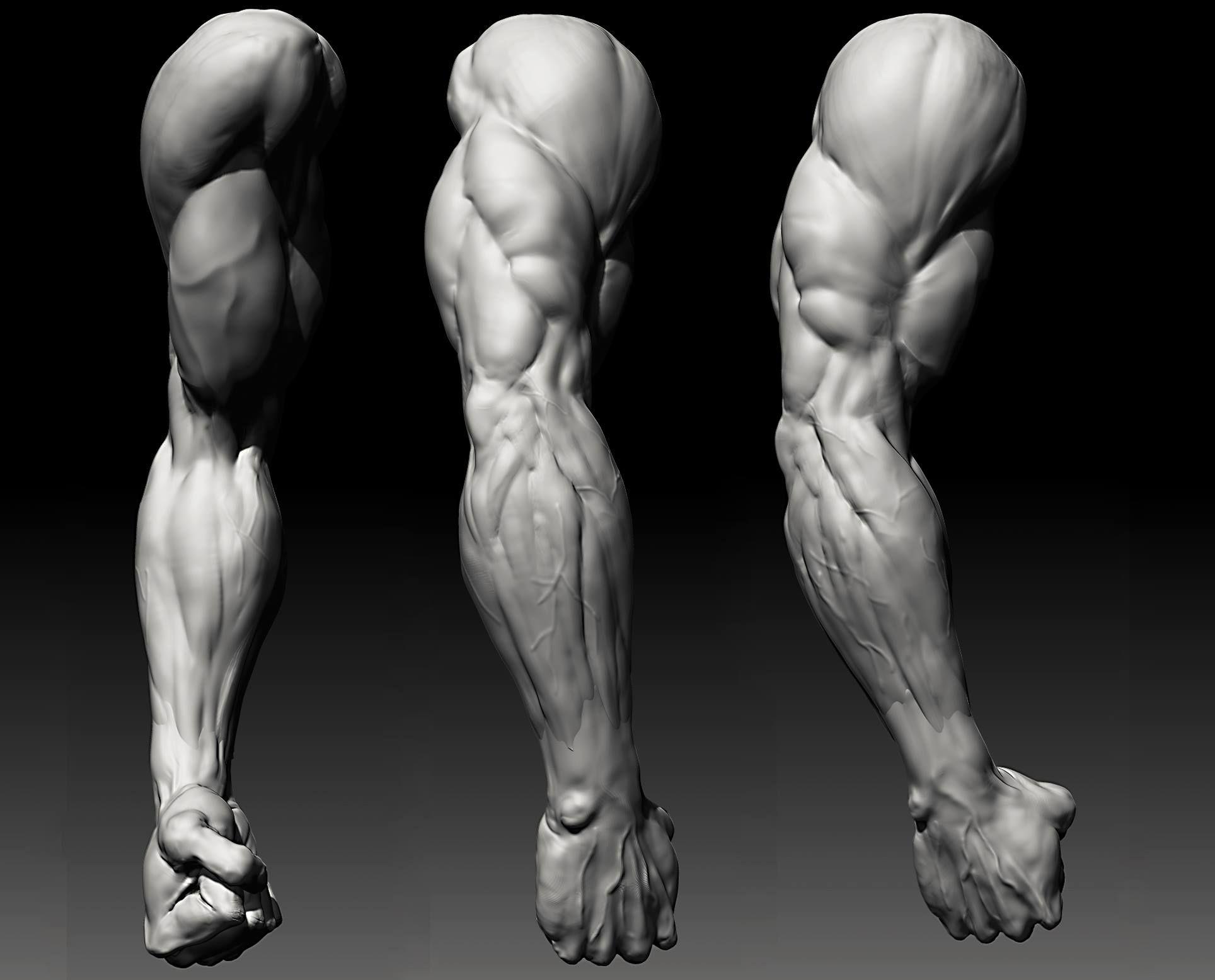 David Lesperance Anatomy Study (davidlesperance.blogspot.com) | 3D ...
