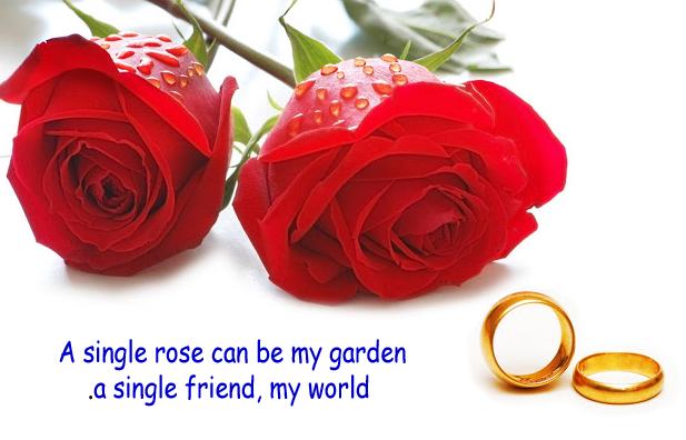 #happy_rose_day_2017 #happy_rose_day_wishes #happy_rose_day_greetings #happy_rose_day_status