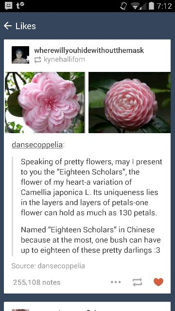 Chinese Camellia Called Eighteen Scholars Because One Plant Can Have A Max Of 18 Blooms Wtf Fun Facts Pretty Flowers Plants