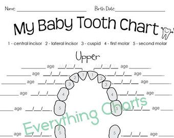 Keep Track Of Your Kids Teeth With This Baby Tooth Chart  Dental